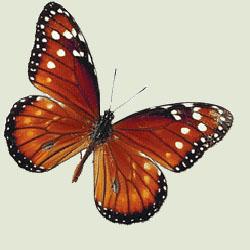 Ghicitoare pentru copii despre fluturi